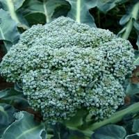 Healthy Broccoli Potato Soup - Authentic German