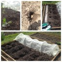 Planting Sweetheart Cabbage and Caro Potatos in a new raised bed.