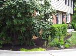 Big C Lawn and Landscaping - Mulch & Spring Cleanup, 2014 - 6