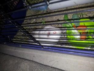 Meet Smudge