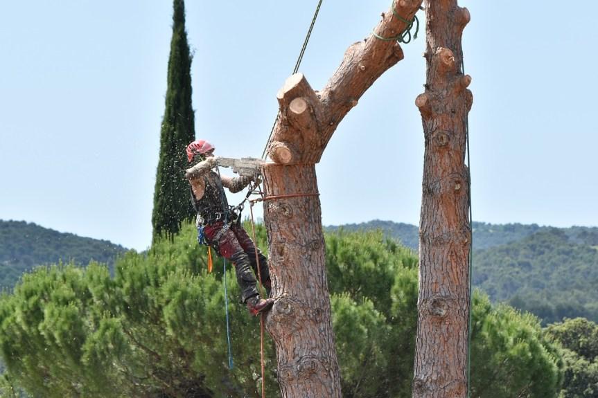 Élaguer les arbres : à la charge du propriétaire ou du locataire ?