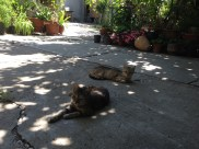 Cats enjoying their siesta
