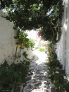 One picturesque alley, full with flowers