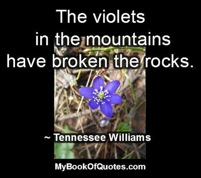 The violets in the mountains have broken the rocks. ~ Tennessee Williams
