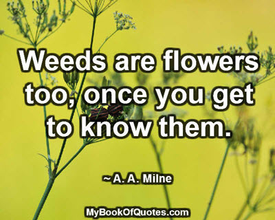 Weeds are flowers too, once you get to know them. ~ A. A. Milne