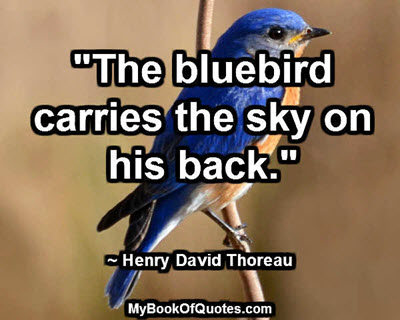 """""""The bluebird carries the sky on his back."""" ~ Henry David Thoreau"""
