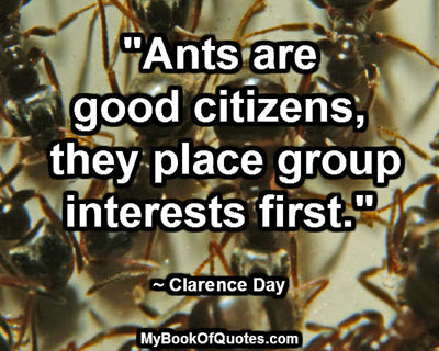 """Ants are good citizens, they place group interests first."" ~ Clarence Day"