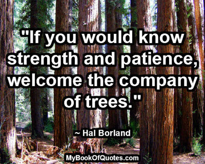 """""""If you would know strength and patience, welcome the company of trees."""" ~ Hal Borland"""