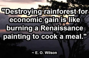 """Destroying rainforest for economic gain is like burning a Renaissance painting to cook a meal."" ~ E. O. Wilson"