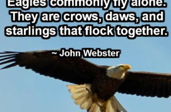 Eagles commonly fly alone