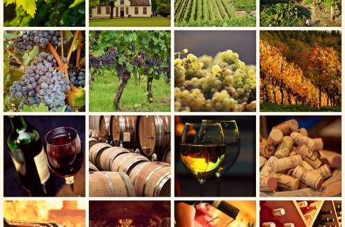 South African Wine History