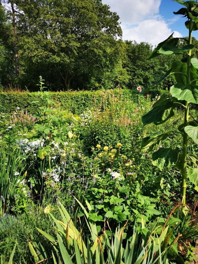 an english wild garden