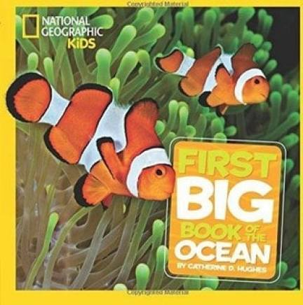 little big book of the ocean underwater books for toddlers