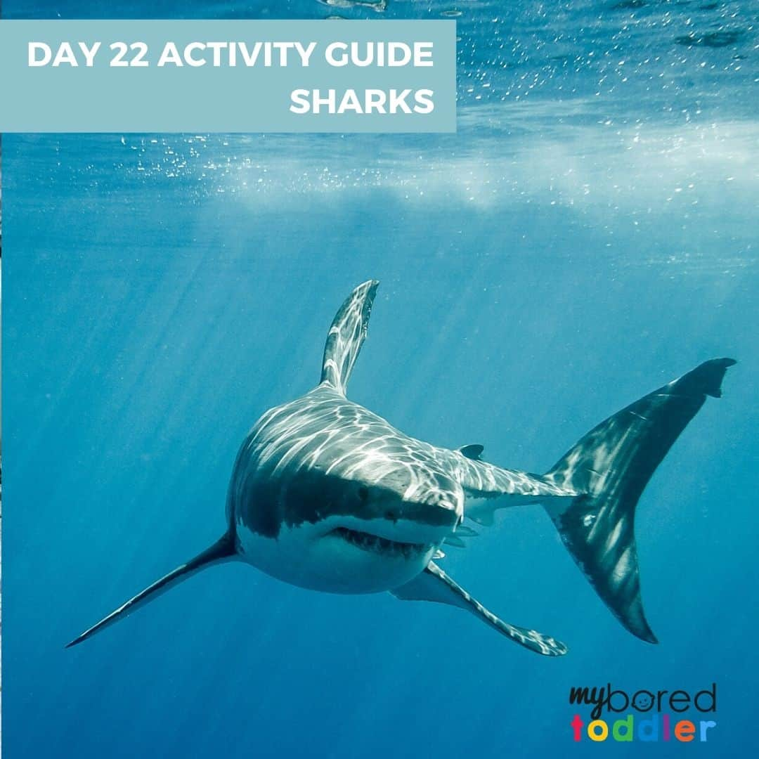SHARKS INDOOR TODDLER ACTIVITY IDEAS