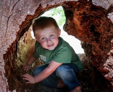 little kid in tree