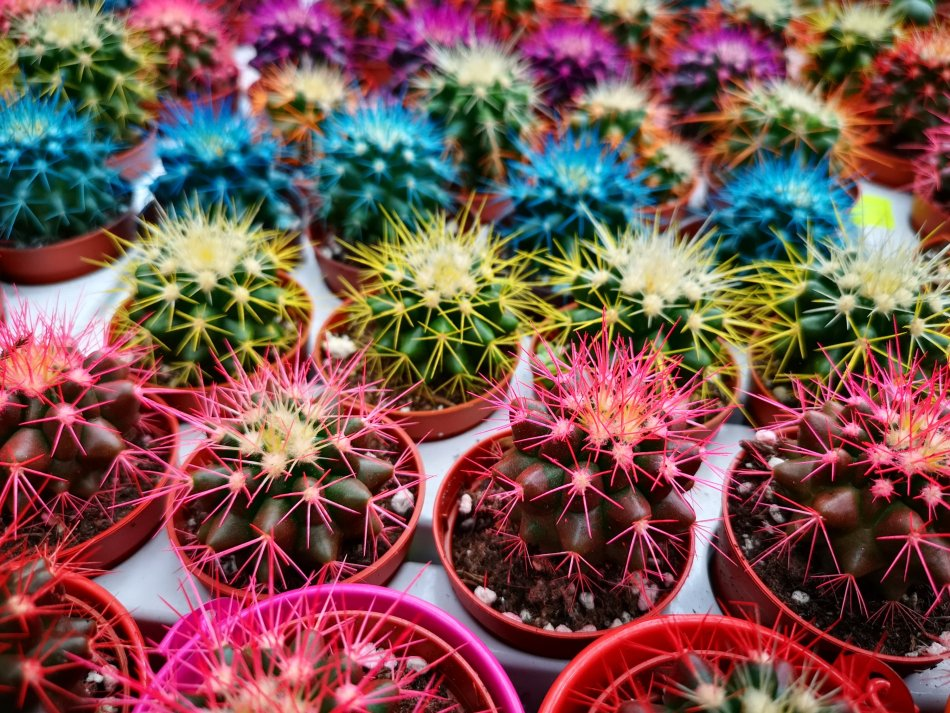 Perełki Dolnego Śląska oraz małe kaktusy z palmiarni wałbrzyskiej