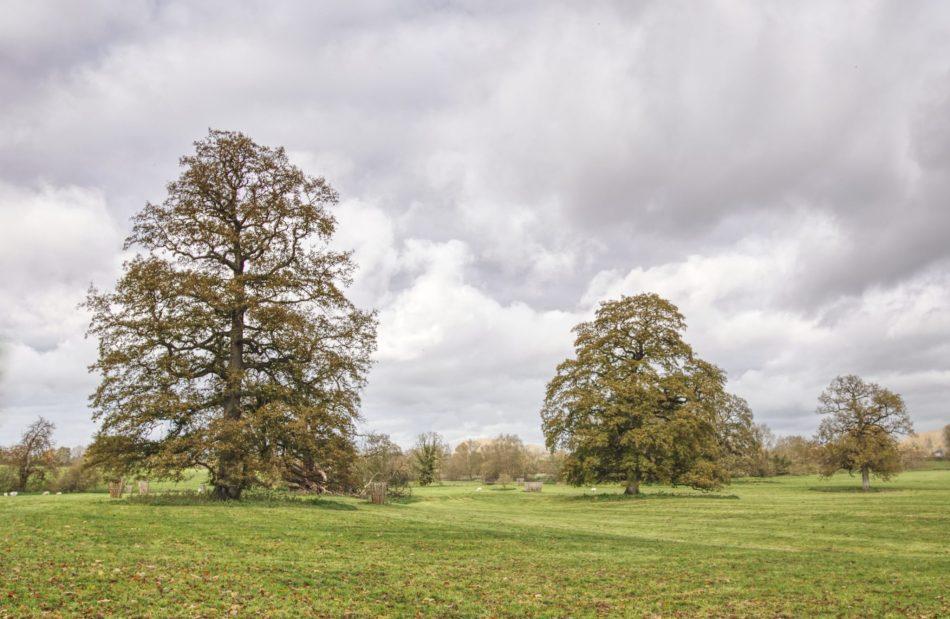 Lacock jesienny park