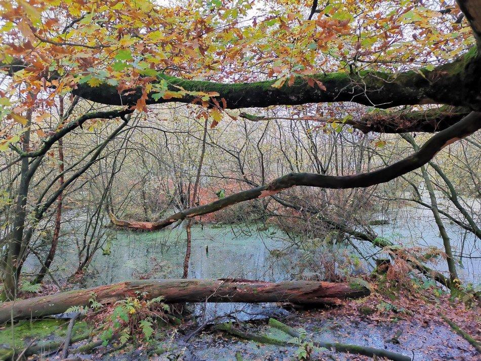 W listopadzie idź do lasu - torfowiska Delamere Forest