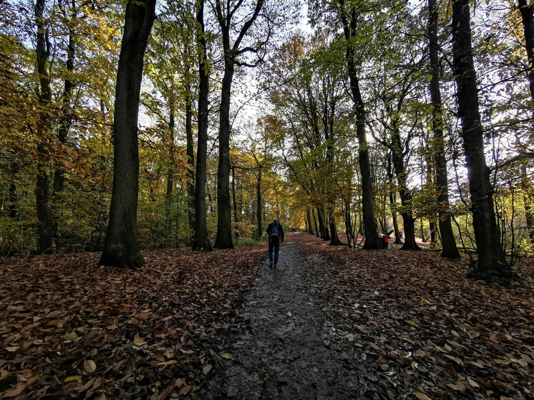 Czy odwiedziłeś już las tej jesieni?