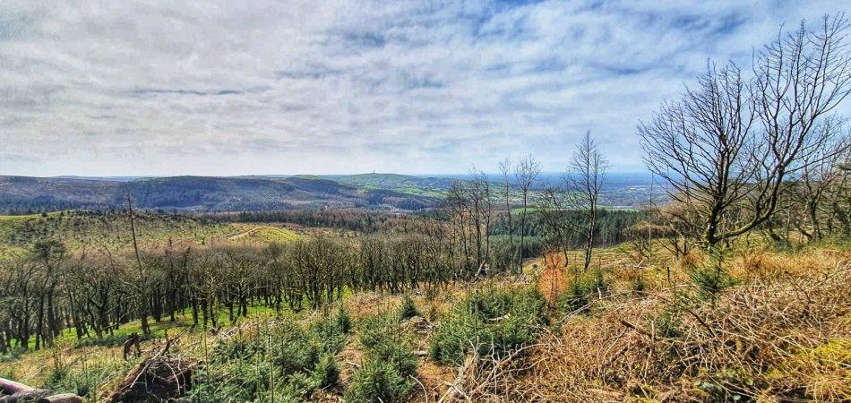 Panorama Cheshire