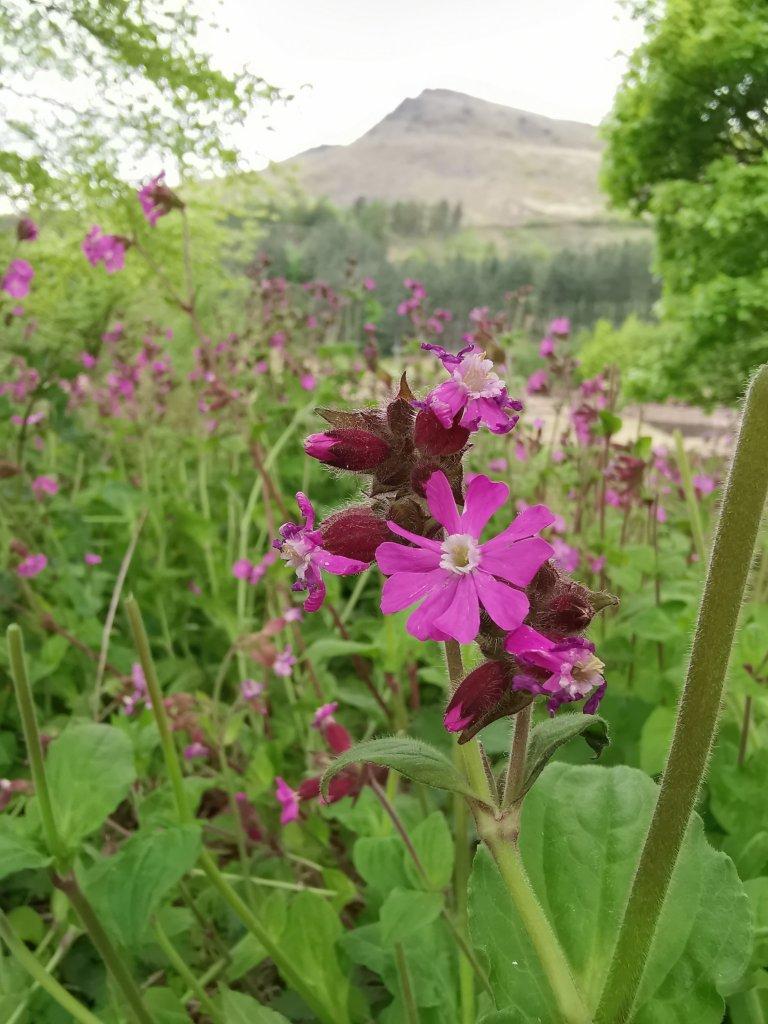 Kwiaty w Dolinie Dovestone