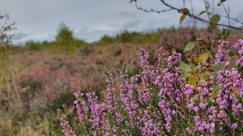 Sen o odzyskaniu niepodległości - Culloden Moor