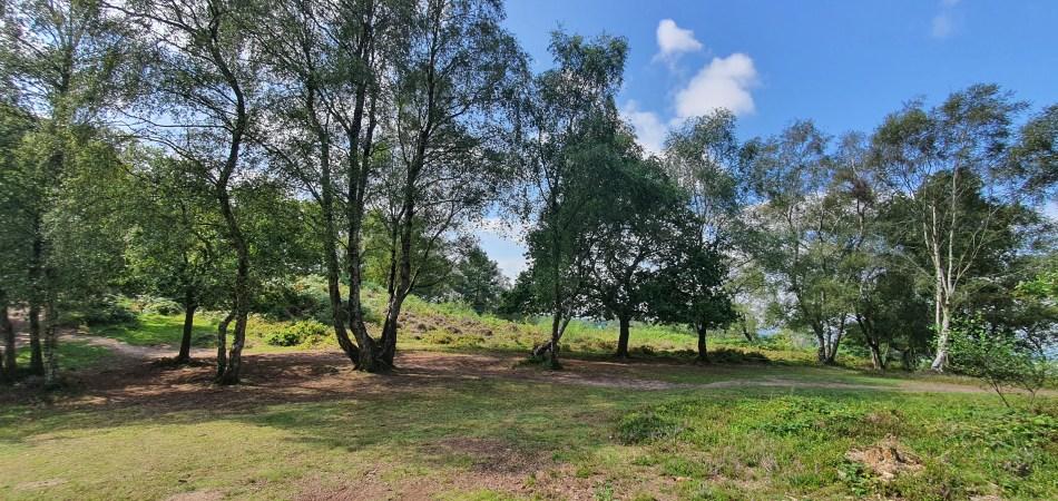 wędrówka po Bickerton Hill - wrzosowiska
