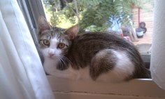 Mimi's first day home on the bathroom window sill