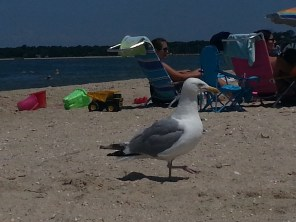 More seagull action