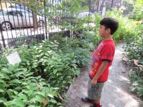 Observing the plants