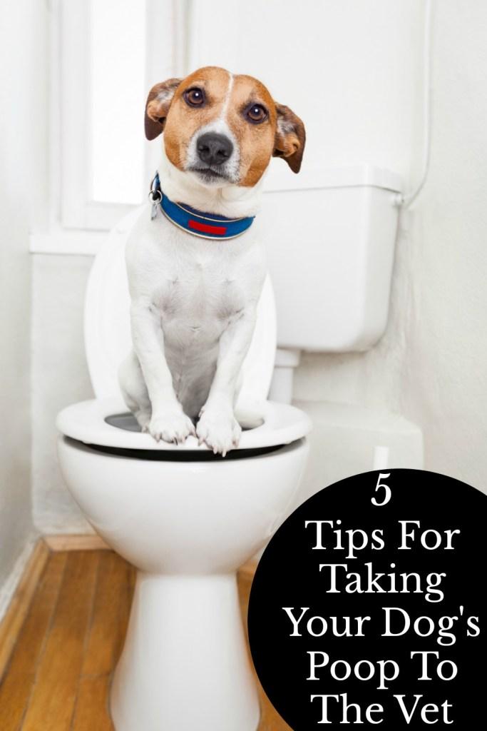 dog sitting on toilet