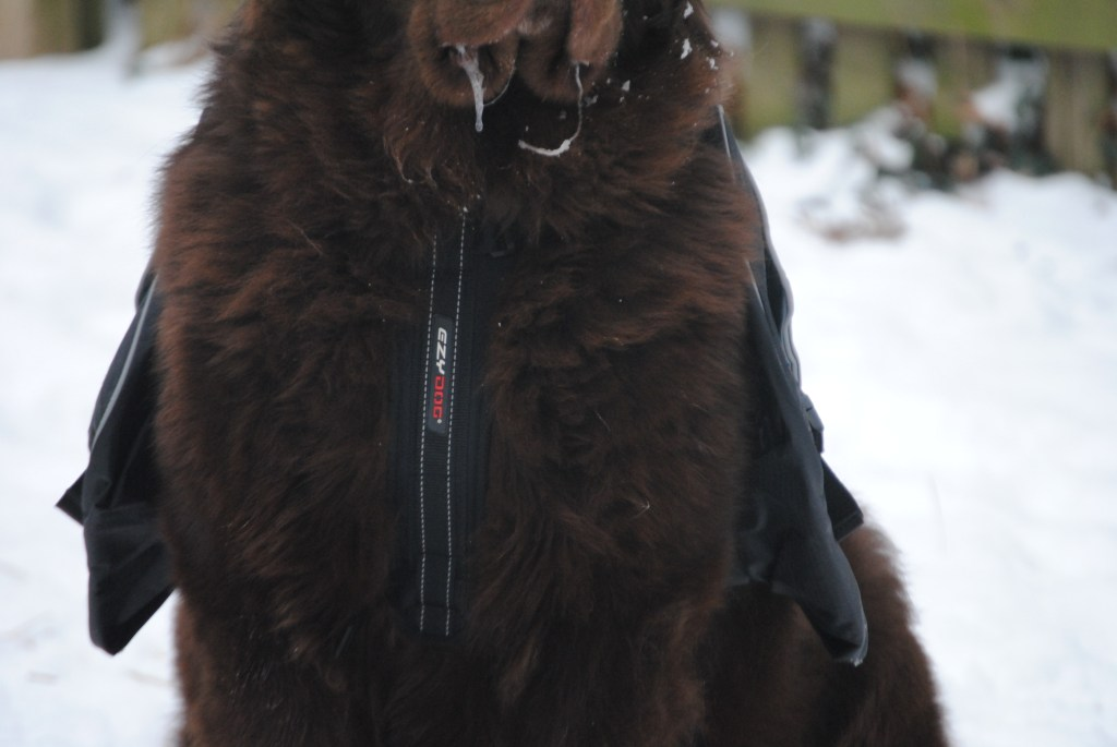 Front Chest Plate On EzyDog Summit Dog Backpack
