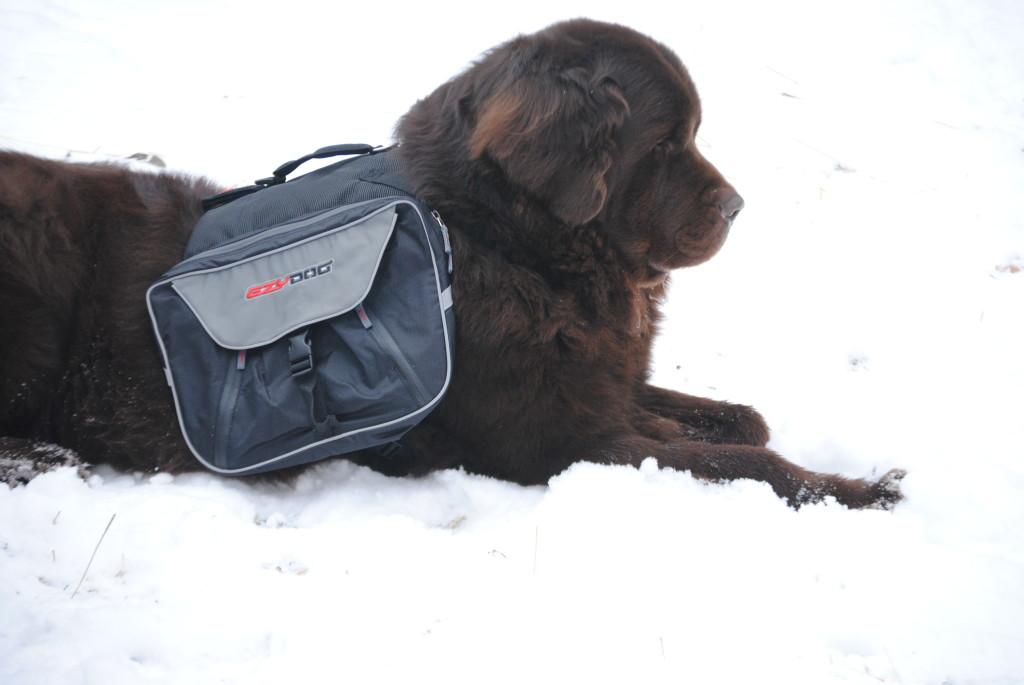 EzyDog Summit Dog Backpack Review