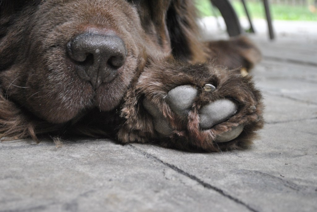 5 Easy Ways To Stop A Dog's Bleeding Nail
