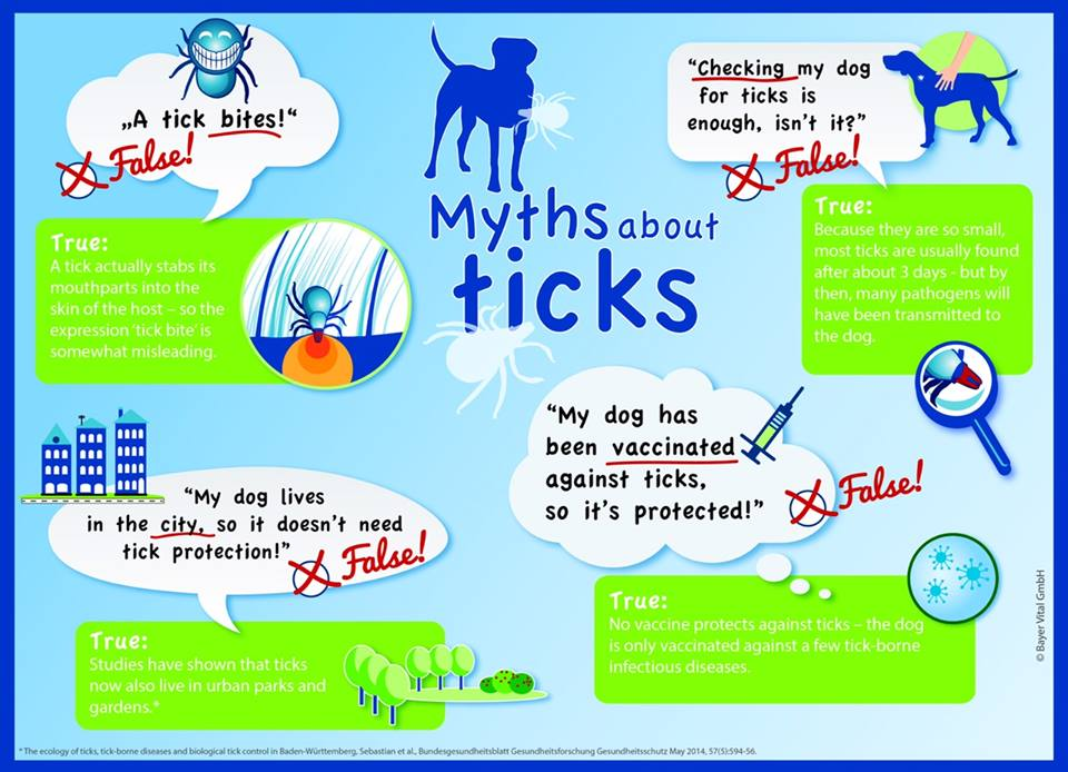 4 commom myths about ticks