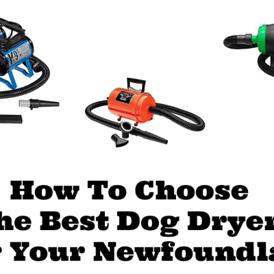 How To Choose The Best Dog Dryer For Your Newfoundland