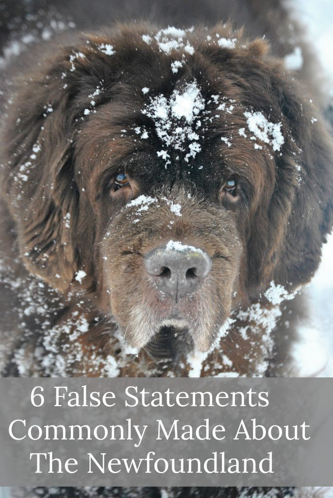 6 False Statements Commonly Made About The Newfoundland
