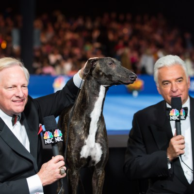 The National Dog Show And #DogThanking With Purina. A Thanksgiving Tradition
