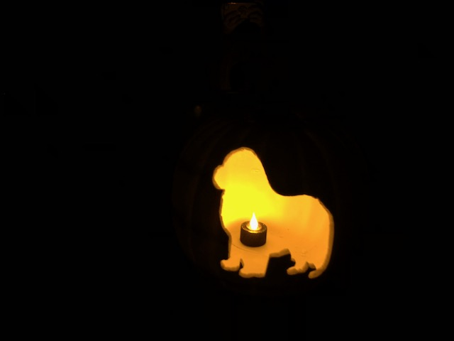 Glowing Newfoundland dog pumpkin carving