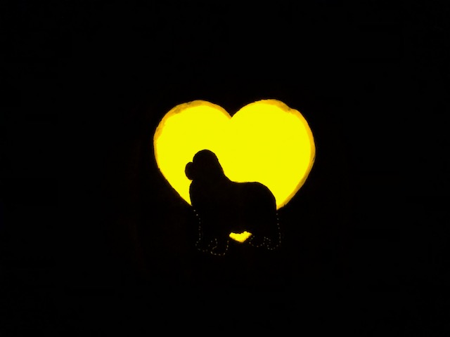 glowing newfoundland dog and heart Halloween pumpkin carving pattern