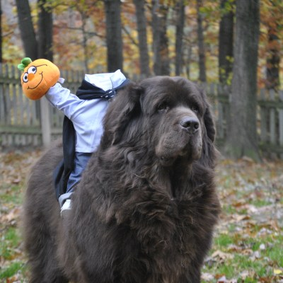 Halloween Dog Costumes Of The Past