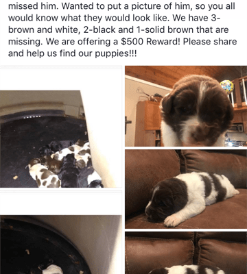 Litter Of 7 Newfoundland Puppies Stolen In Ohio
