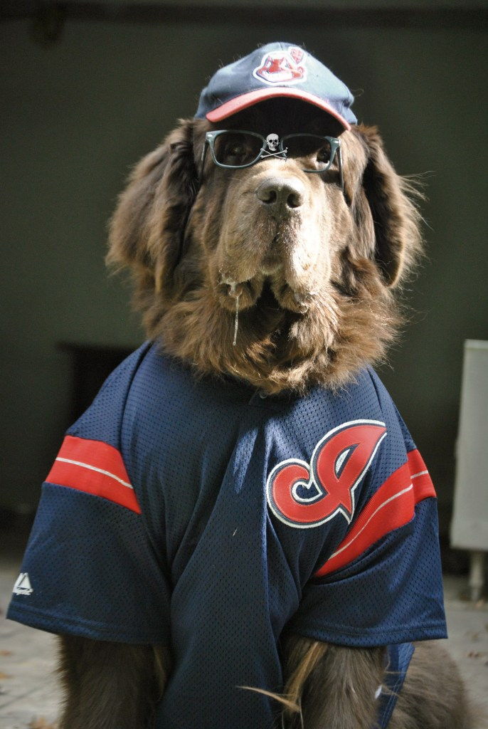 Newfoundland dog dressed as Wild Thing
