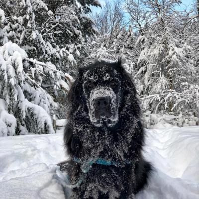 22 Newfies That Aren't As Cold As You