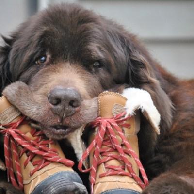 Best Winter Dog Walking Gear