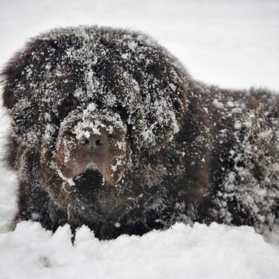 4 Ways To Combat Snowballs On Dog Paws