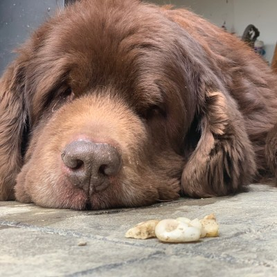 How To Try And Stop Your Dog From Eating Rocks ( From Someone That Has A Dog That Used To Eats Rocks)