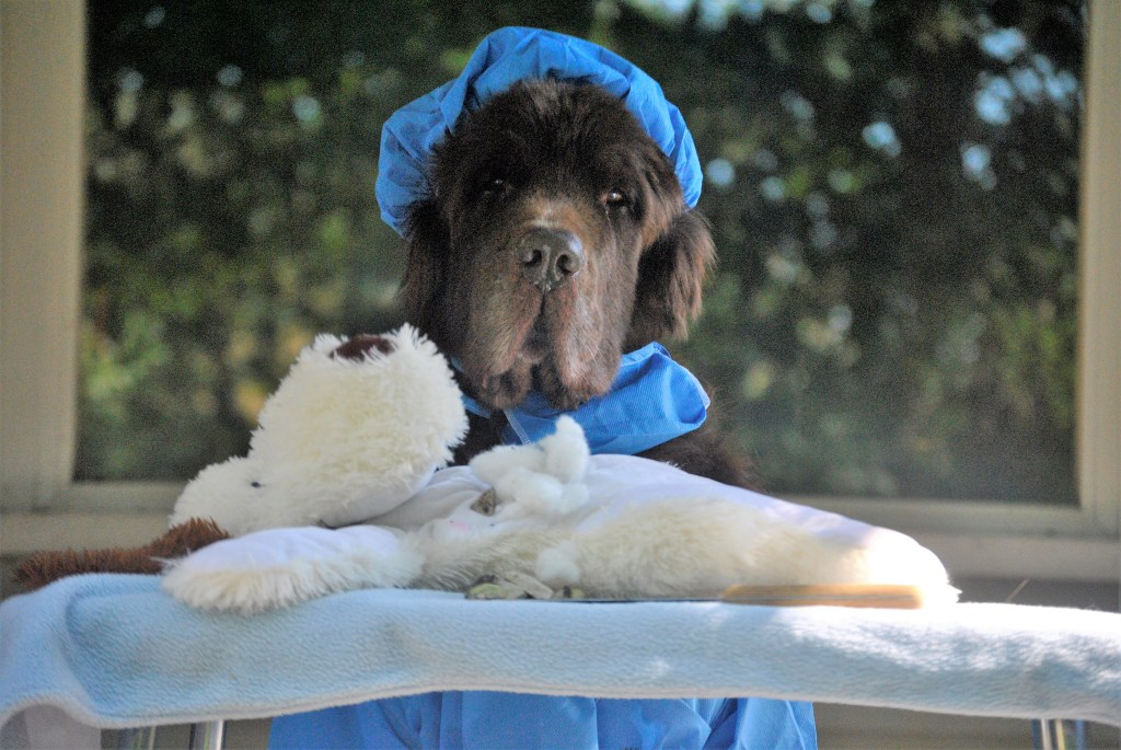 3 Important Questions To Ask Before Your Dog Goes Under Anesthesia