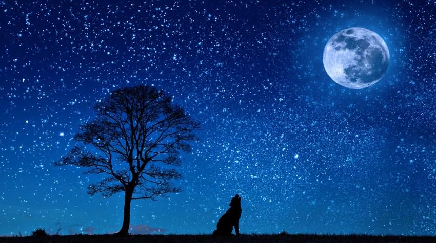 dog holwing at full moon