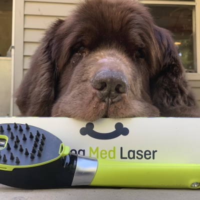 Does At-Home Low Level Laser Therapy For Dogs Work?